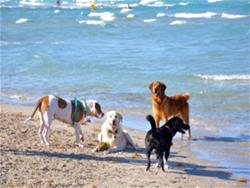 Dog Beach2 small.jpg