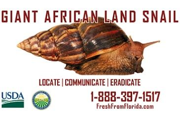 Giant African Land Snail Inspection Program