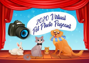Dogs, Cat, Rabbit, and Camera on Stage Cartoon
