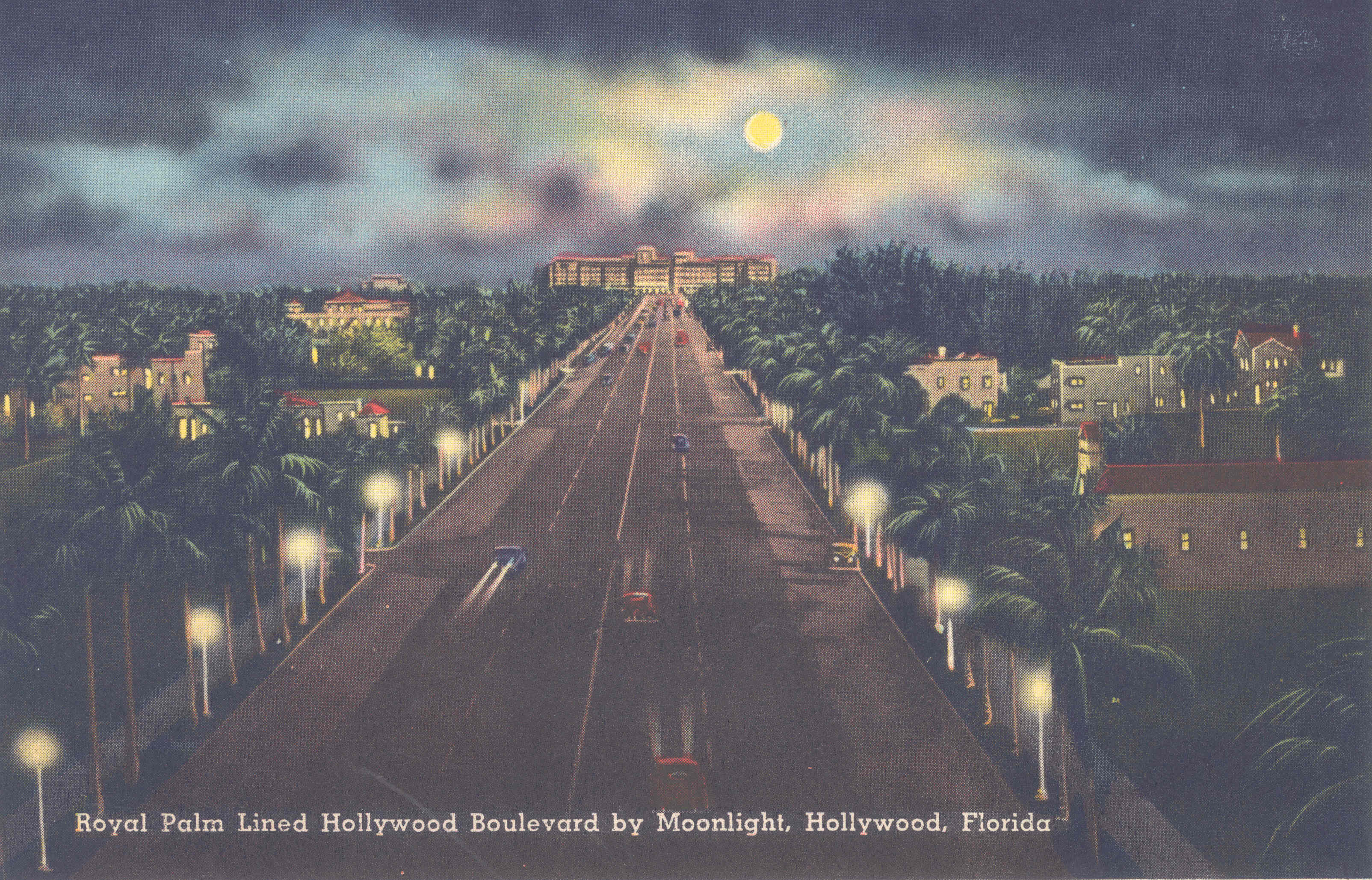 Royal Palm Lined Hollywood Boulevard by Moonlight