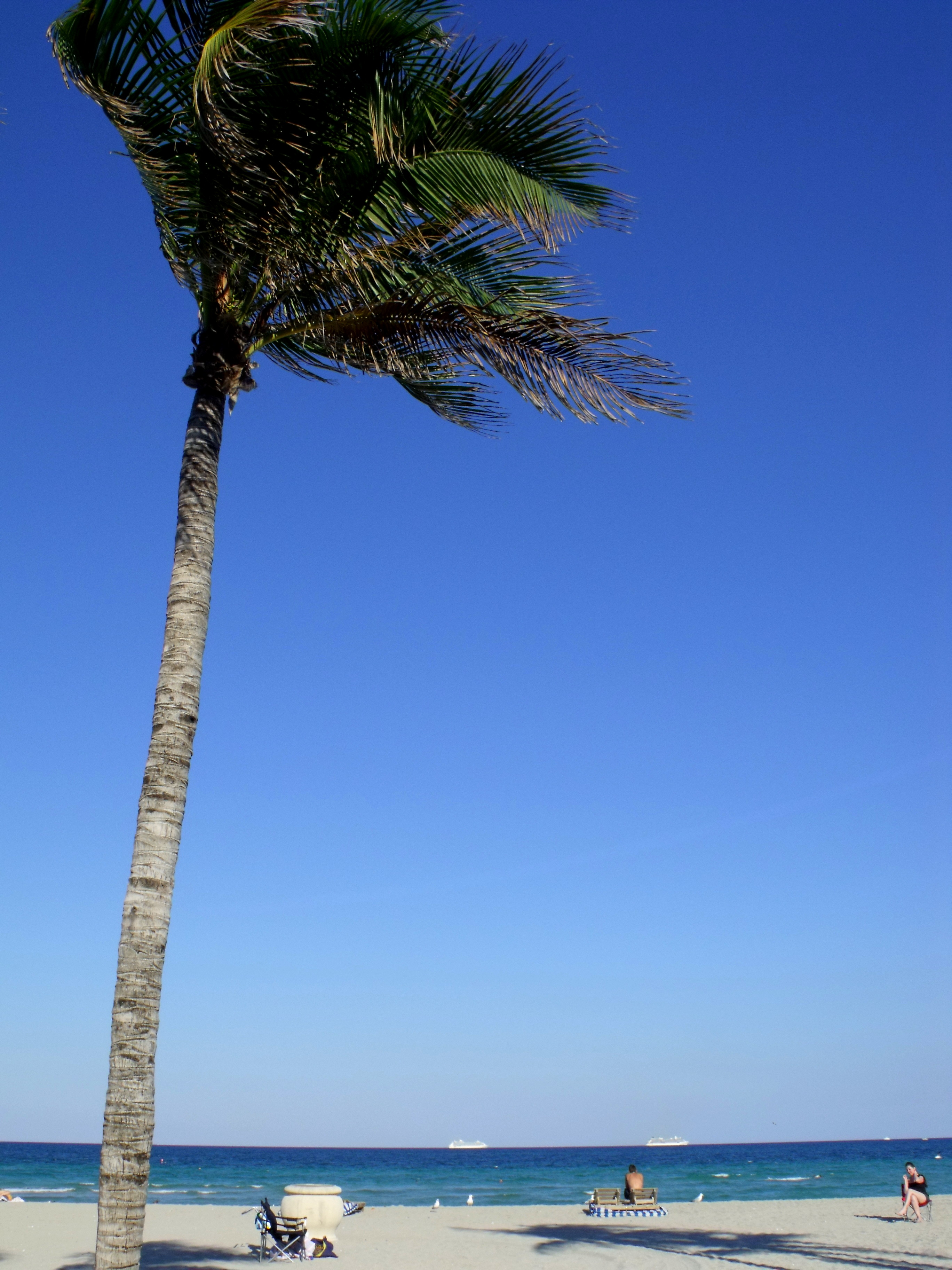 Blue Sky and Pretty Palms