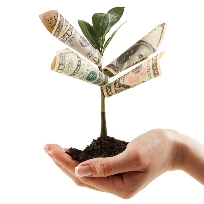 Hand holding tree seedling, dollar bills replace leaves