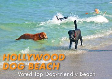 Hollywood Dog Beach Voted Top Dog