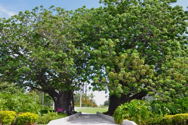 Baobab Trees | Hollywood, FL - Official Website