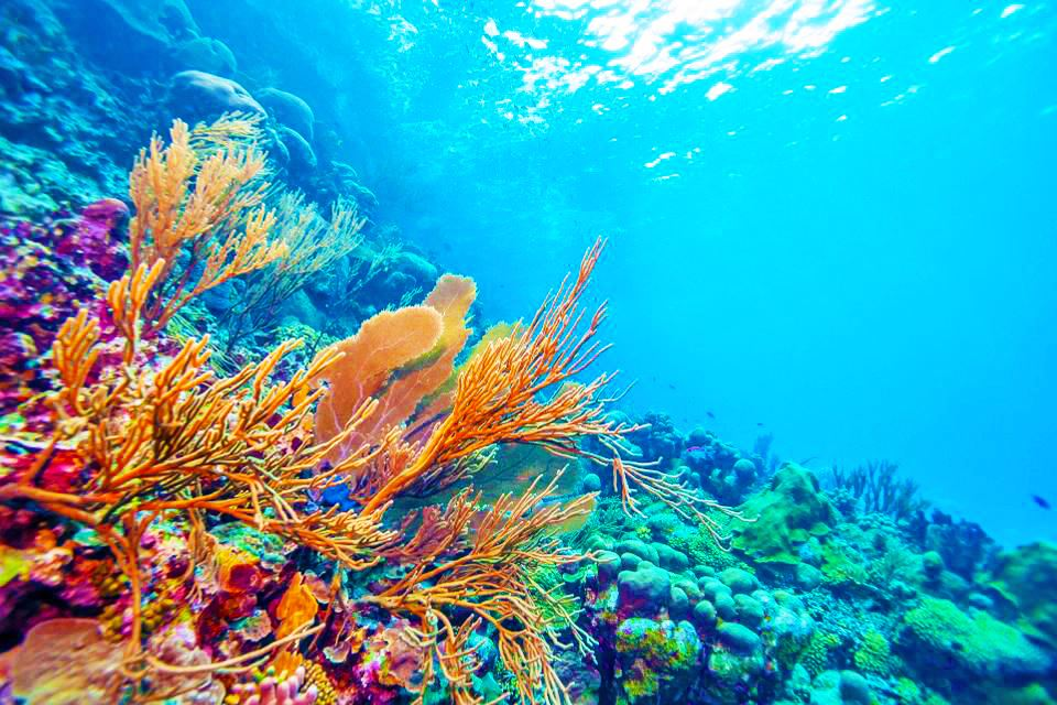 Underwater photo of beautiful colorful coral reef