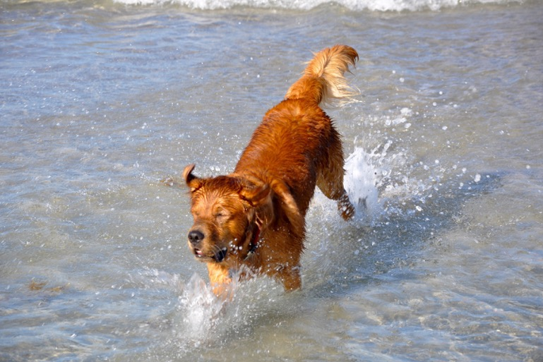 Dog Park Hours Are From Dawn To Dusk Does Not Include Beach See Times Of Operation Below Dogs Need Be Supervised And Non Aggressive Toward Other