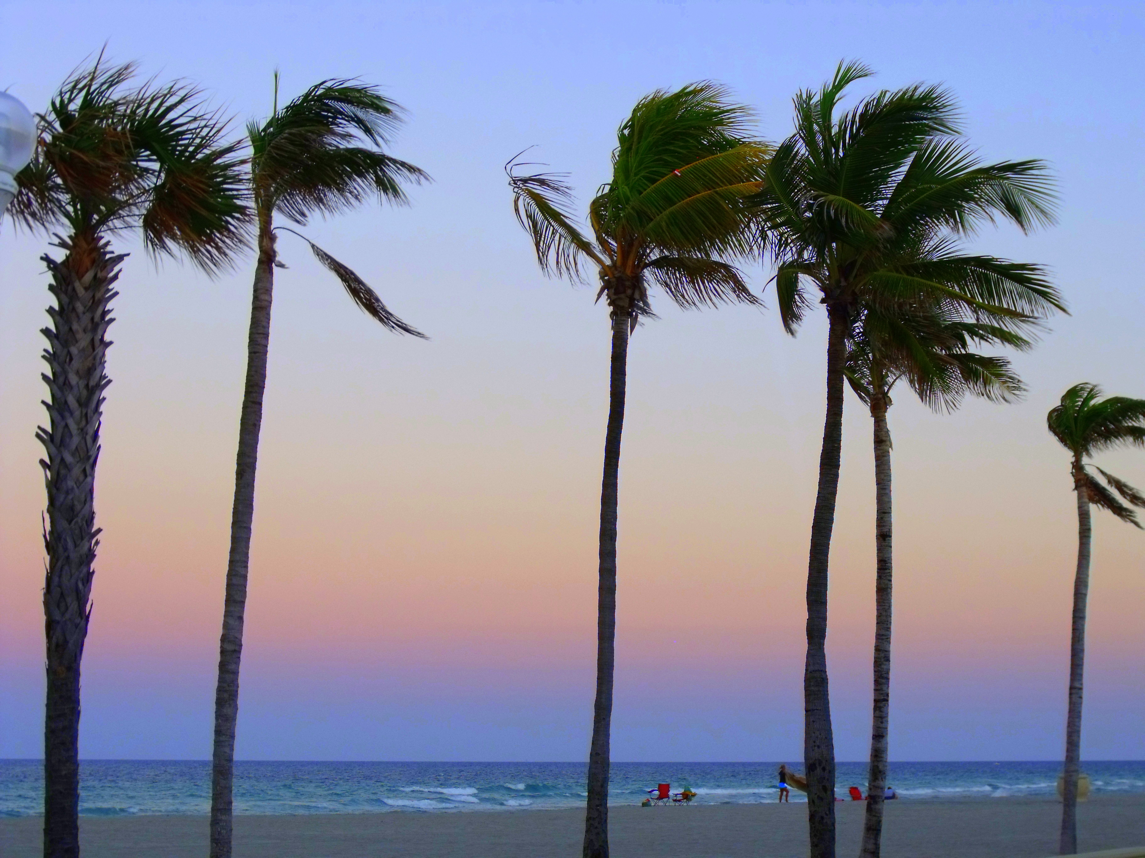 Thumbs Up Palm Trees And Sunset
